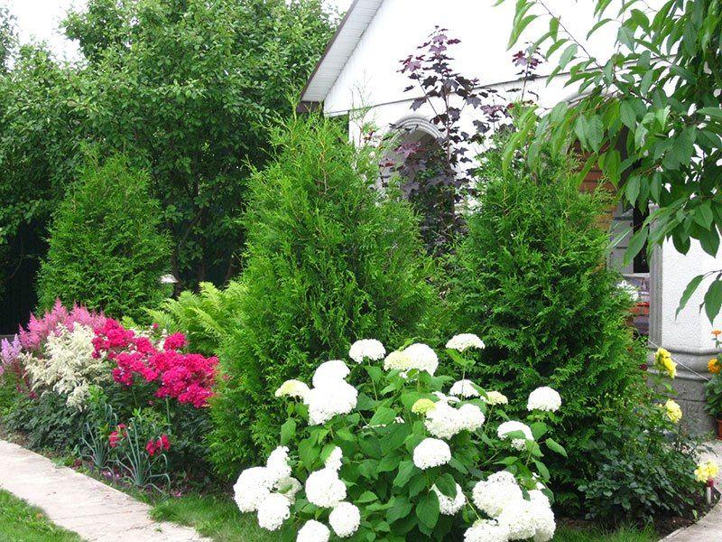 Можно ли гортензию сажать рядом с розами