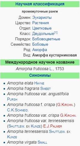 amorfa-kustarnikovaya