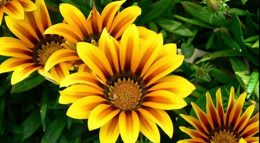 Как выращивать растение из семян