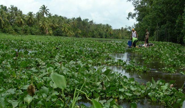 Особенности выращивания в пруду Источник: http://znaysad.ru/?p=4815&preview=true