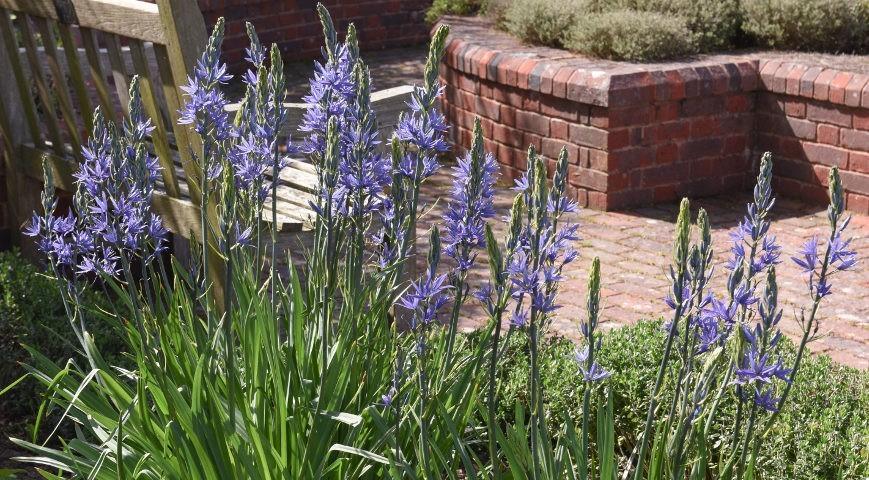 Применение в оформлении сада