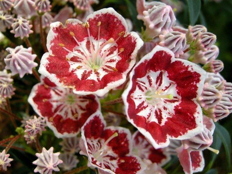 Самый красивый и опасный цветок.