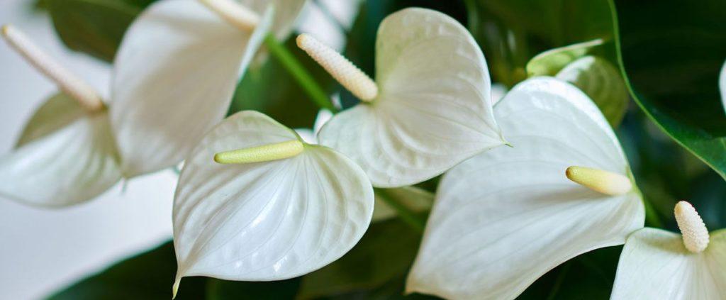 Условия цветения