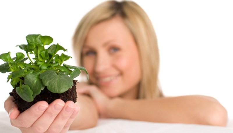 Правила пересадки растения