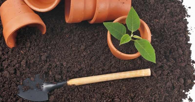 Выбор почвы и особенности ее удобрения