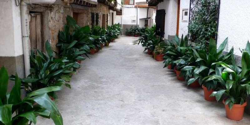Главные критерии ухода за растением