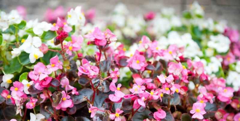 Причины для садовых
