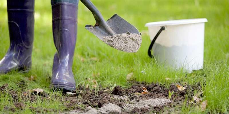 Выбираем место и почву