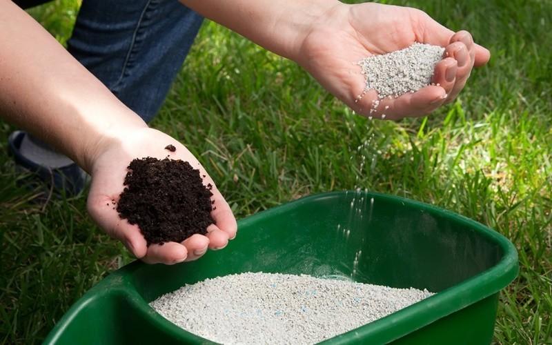 Чем подкормить георгины для цветения