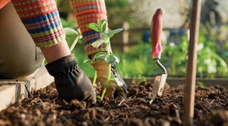 Выбор почвы и посадка