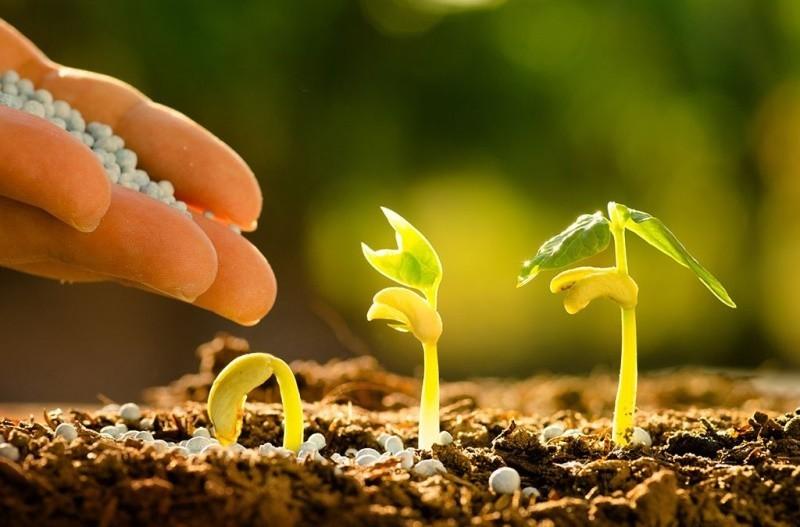 Почва и подкормки