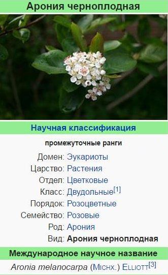 aroniya-chernoplodnaya