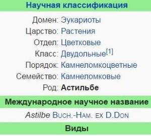 astilba-montgomeri