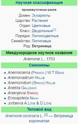 cvetok-anemona