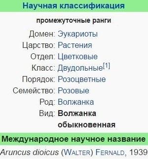 volzhanka-obyknovennaya