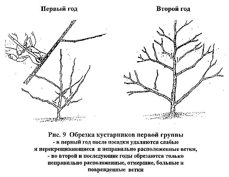 обрезка чубушника осенью