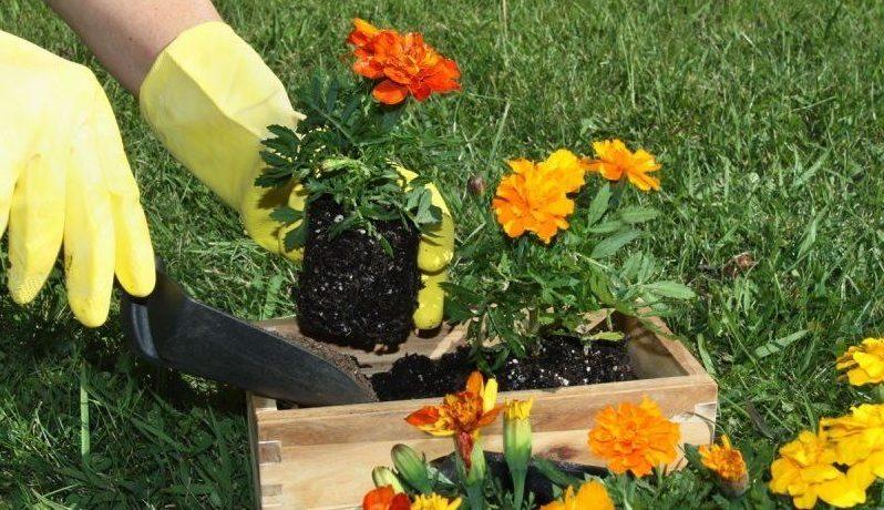 Особенности выращивания цветов