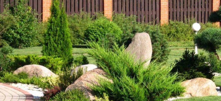 Как правильно посадить кипарисовик и ухаживать за ним
