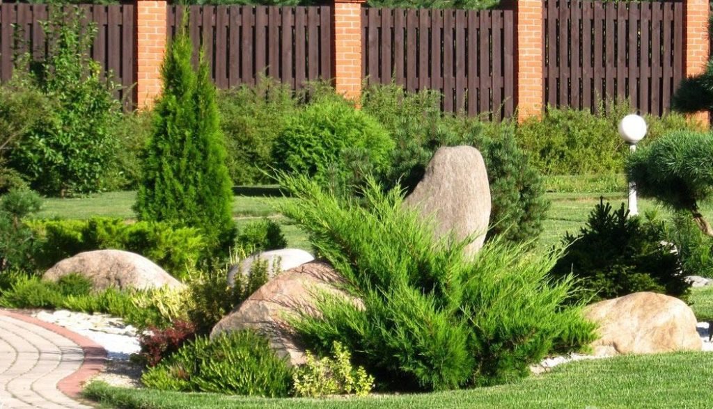 Посадка и уход за кипарисом в саду - как сажать поливать обрезка видео