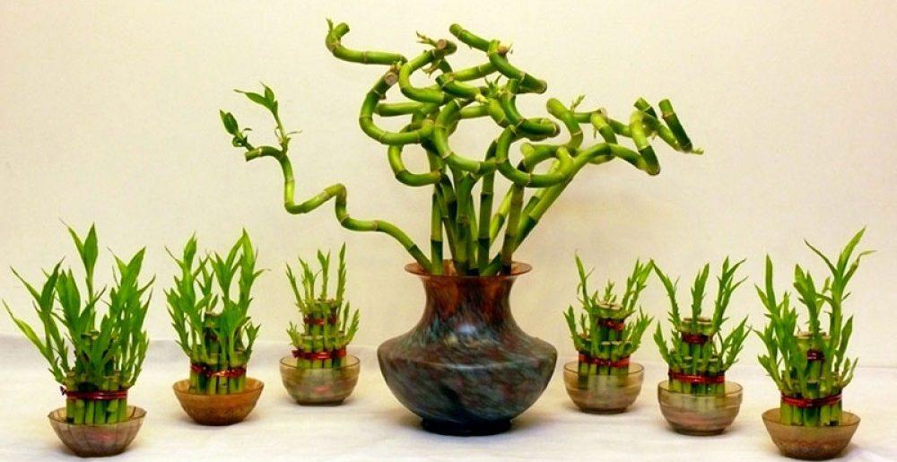 Условия содержания растения