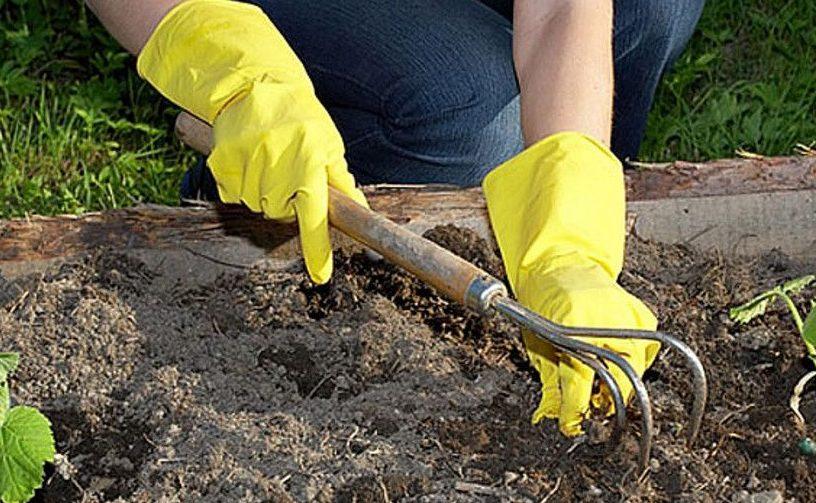 Особенности выращивания растения