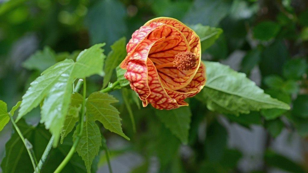 Особенности размножения растения