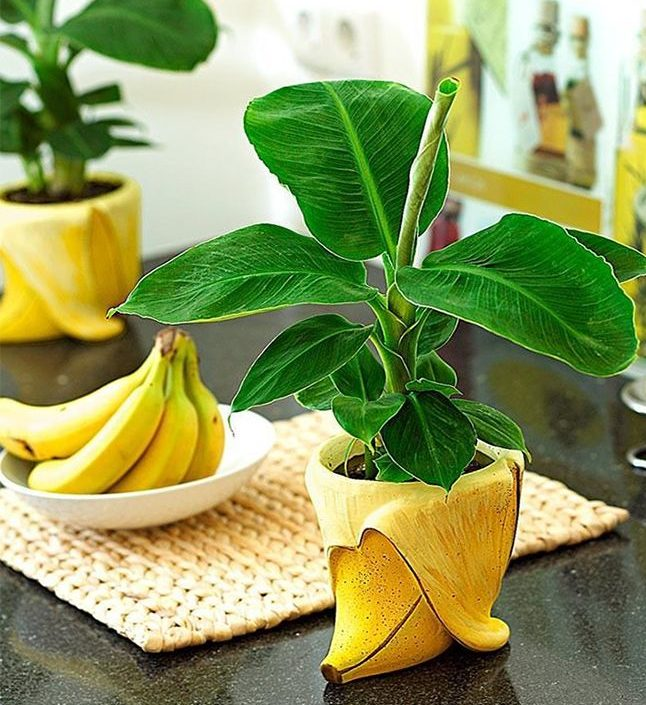 Нарезка из фруктов фото в домашних условиях замены двигателя