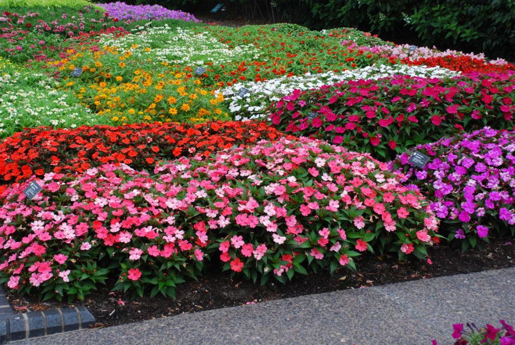 Разные цветы на клумбе