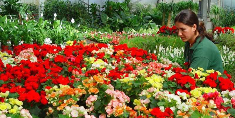 Правила выращивания растения в открытом грунте