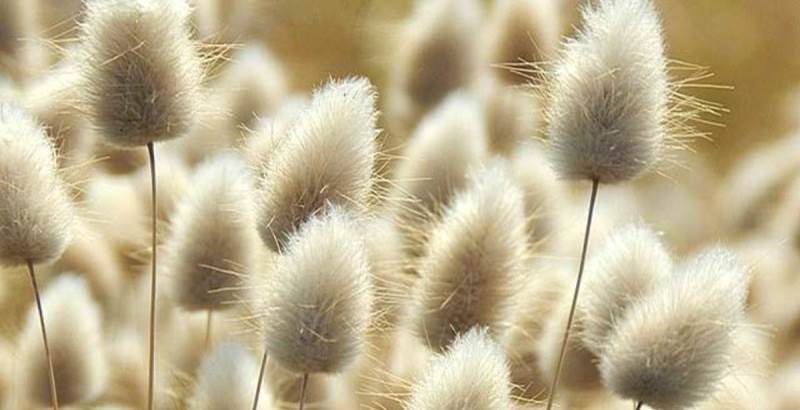 Выращивание из семян
