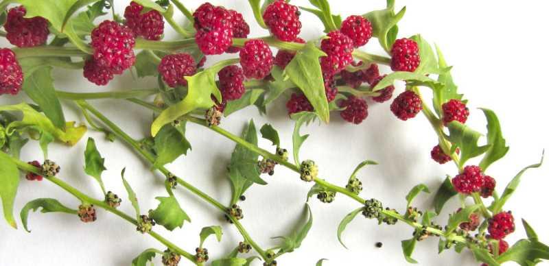 Декоративность растения