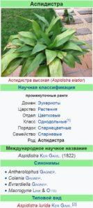Разновидности аспидистры