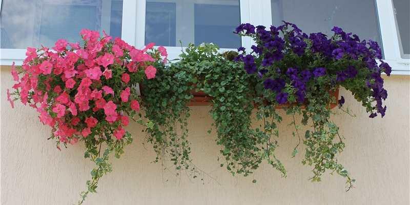 Зимовка многолетнего растения