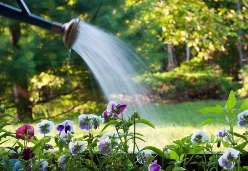 Удобрения и полив гравилата