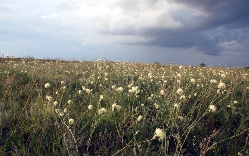 Ботаническое описание василька и родина произрастания