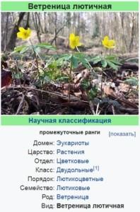 Ботаническое описание ветреницы лютичной