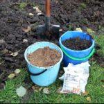 чем подкормить садовую ежевику весной