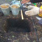 подкормка ежевики весной минеральными удобрениями
